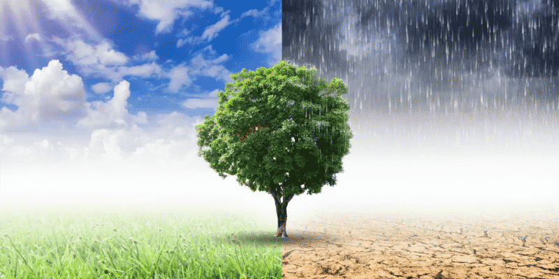 Tree in good and bad conditions